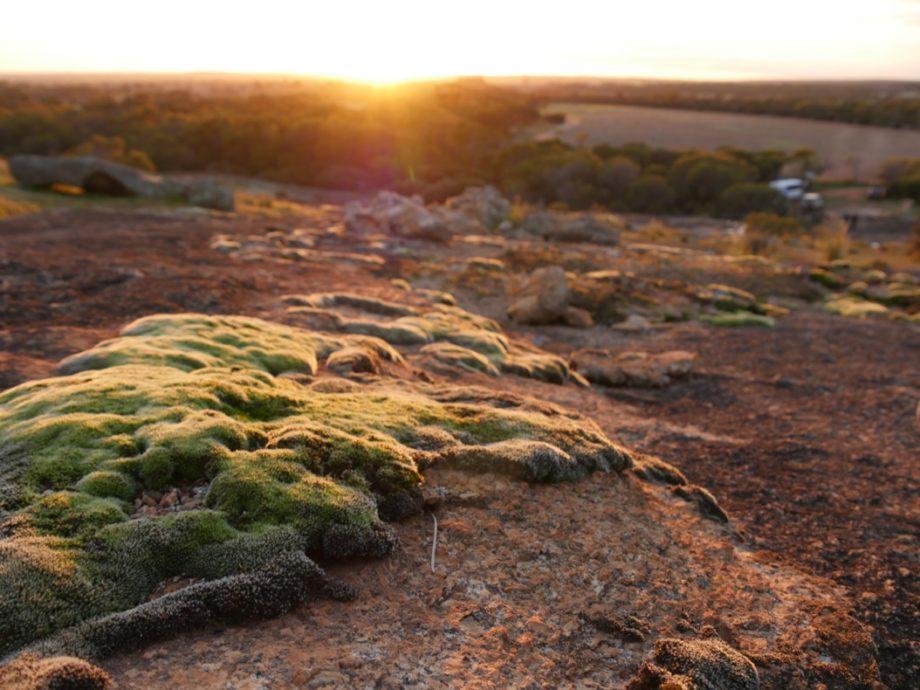 Morning Moss